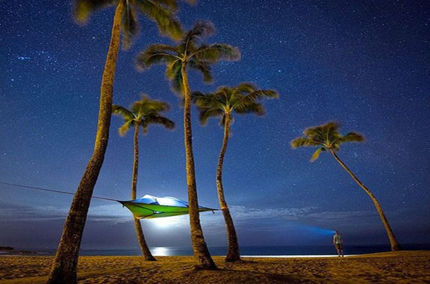 Image of a Tensile tent suspended from palm trees on a beach.