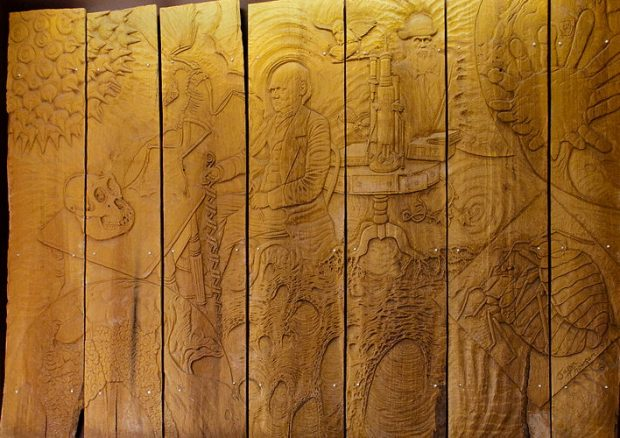 The Darwin Panels
