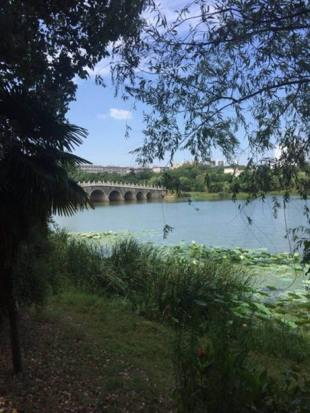 Lake in Zhongnan University of Economics and Law (ZUEL)
