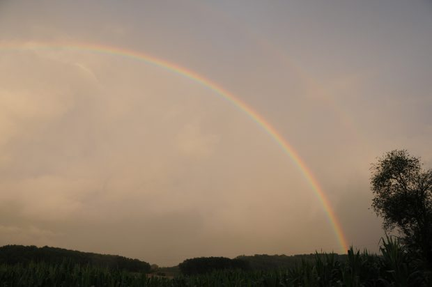 Rainbow arching over a field