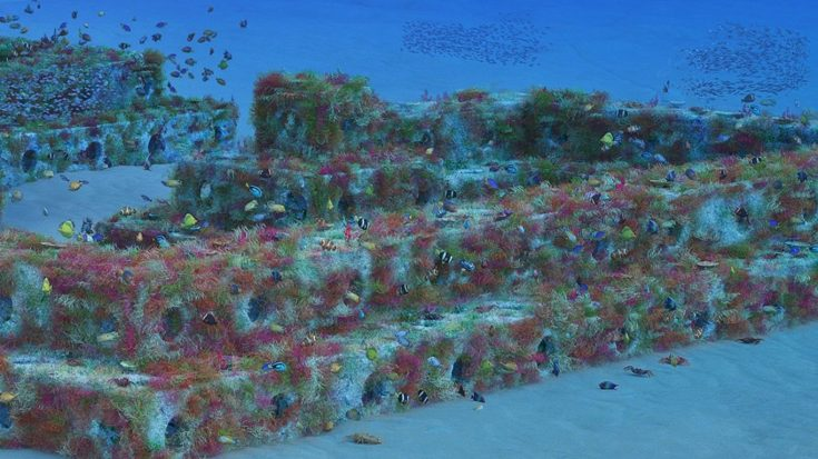 Underwater view of the reef cubes and fish that live in them