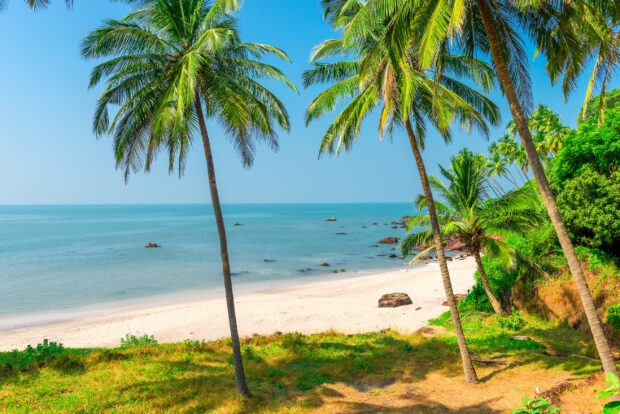 white sand beach and palm trees on a deserted island